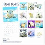 2019 mois carrés à vue animaux Photo calendrier mural - gris ours polaires de la marque Tallon image 1 produit