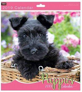 calendrier photo carré TOP 10 image 0 produit