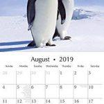 pingouins 2019carré Calendrier mural de la marque The Gifted Stationery Co Ltd. image 1 produit